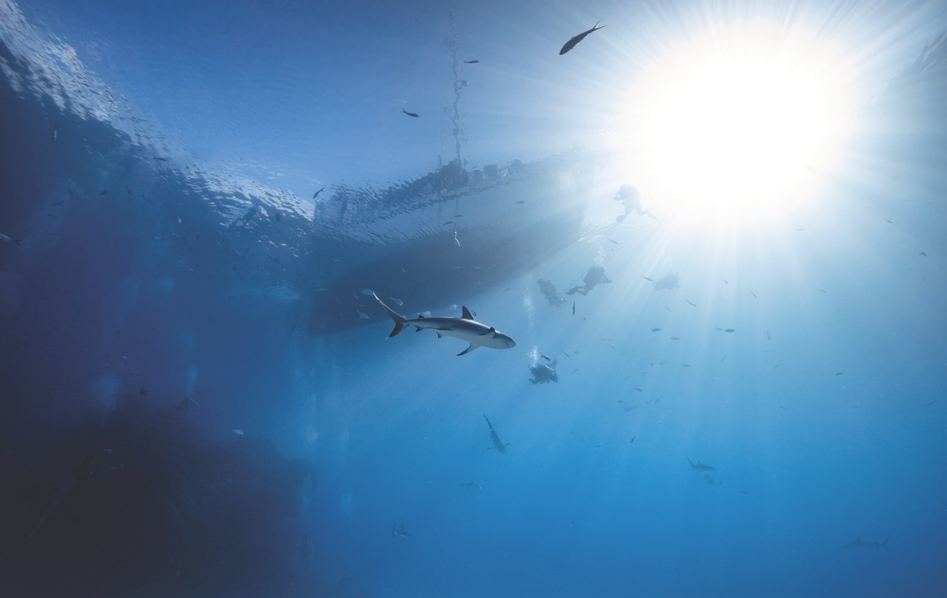 Divers descend from a liveaboard boat for a shark dive in the Bahamas.
