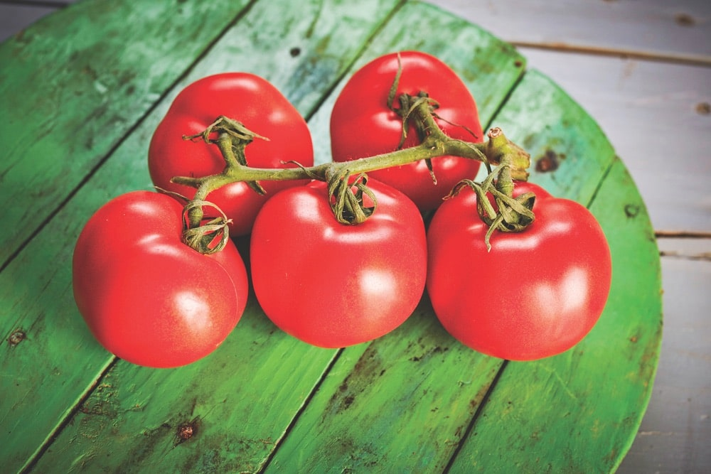 Vine-ripened tomatoes tasting of summer are the great glory of Spanish cuisine.