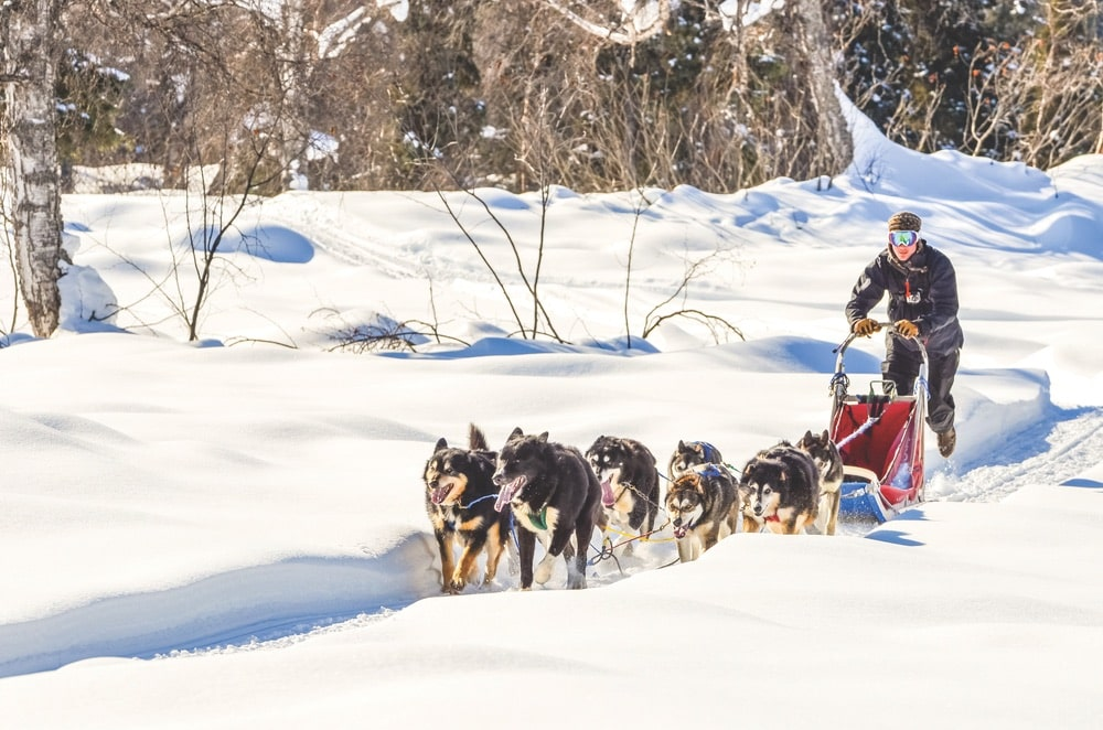 Up on the glaciers, even summer visitors can try dogsledding.