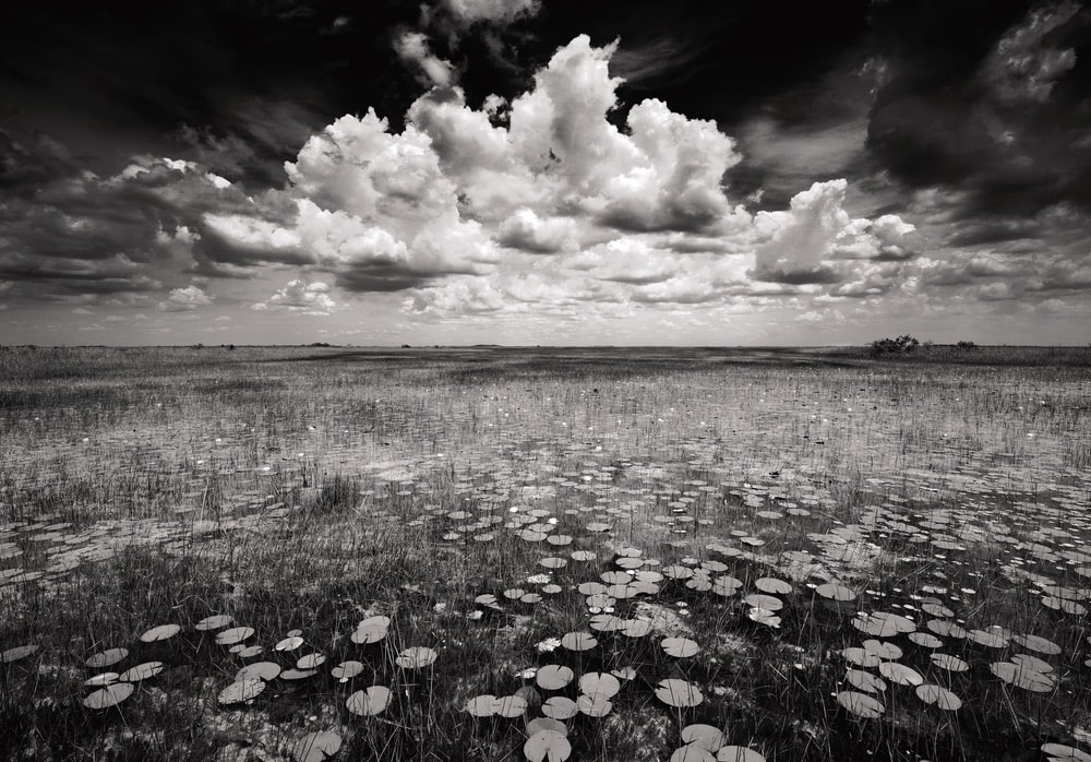 Clyde Butcher Photography, Everglades National Park