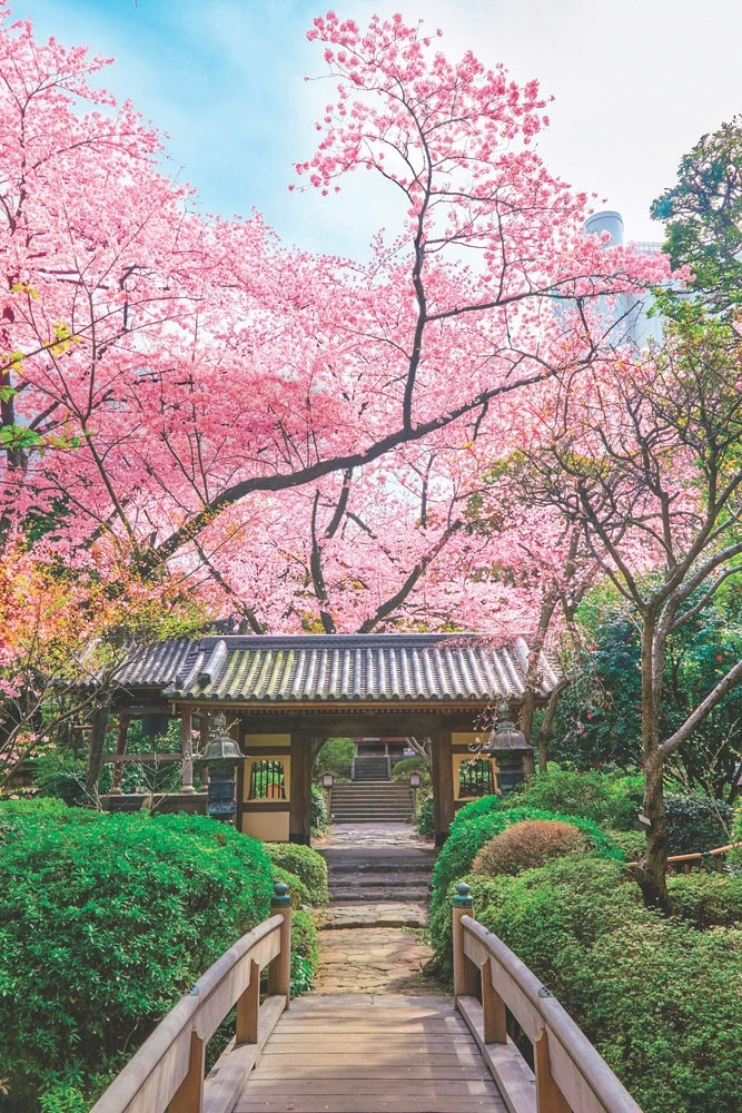 The Japanese garden in Takanawa has over twenty varieties of cherry trees and sixteen types of flowers. It is a short walk from your room at the Grand Prince Hotel Takanawa. | Photo courtesy of Prince Hotels
