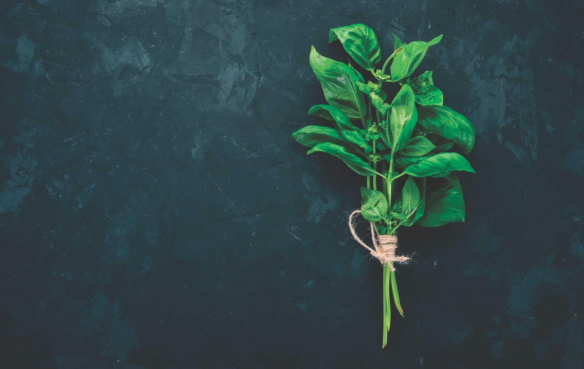 Fresh green basil, Suzanne Pollak Column August 2018 Architecture and Design Issue