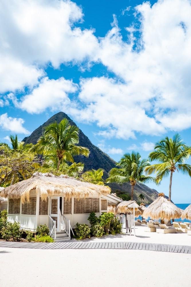 Sugar beach Saint Lucia, a public white tropical beach with palm trees and luxury beach chairs on the beach of the Island St Lucia Caribbean