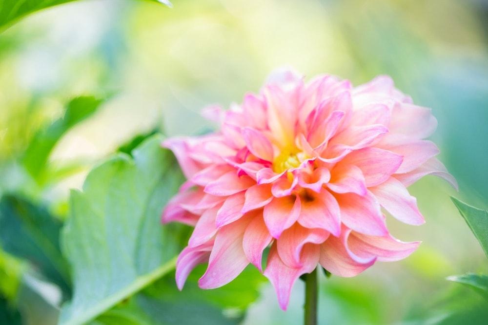 Peach Creek Blooms