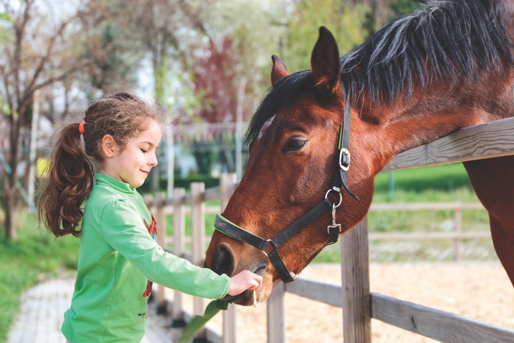 A little girl feeding a horse at Westonwood Ranch in Northwest Florida.