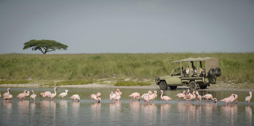 Serengeti National Park, Asilia Africa safari