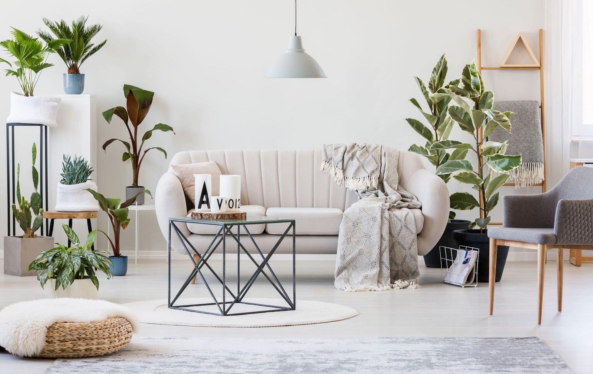VIE Magazine, The Idea Boutique, Five Air-Purifying Plants, Five Air-Purifying Plants to Keep You and Your Home Healthy