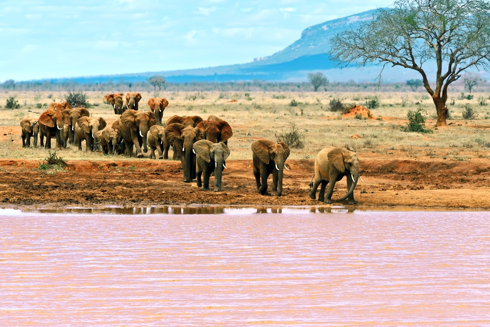 VIE magazine blog webcams at famous places Tsavo National Park Kenya
