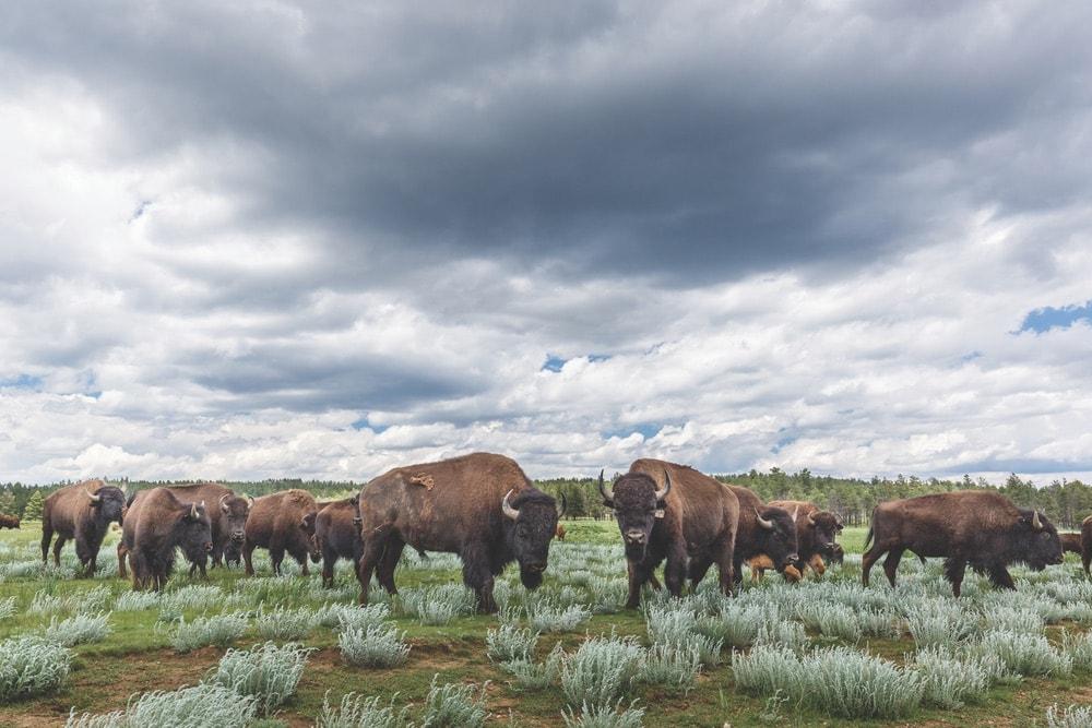 Go West to Vermejo Park Ranch,