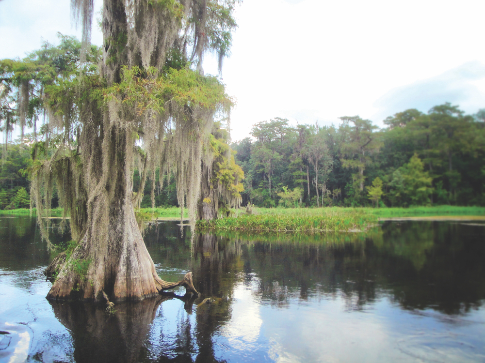 Dark, tannin-rich waters and moss-laden cypress trees at Wakulla Springs State Park