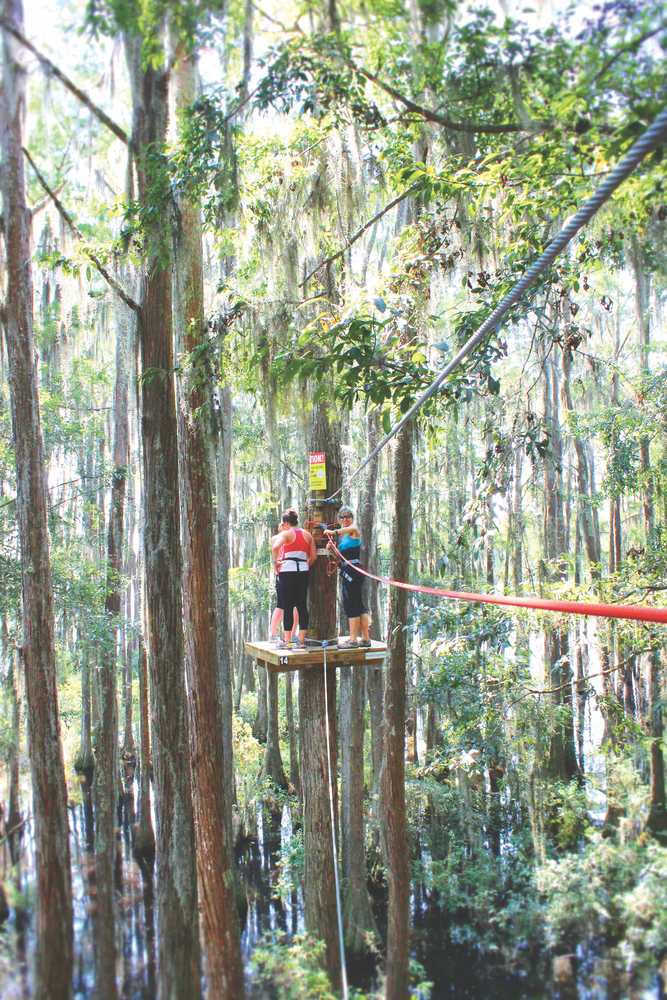 Tallahassee museum's soaring cypress zip-line course traverses high above the swamp