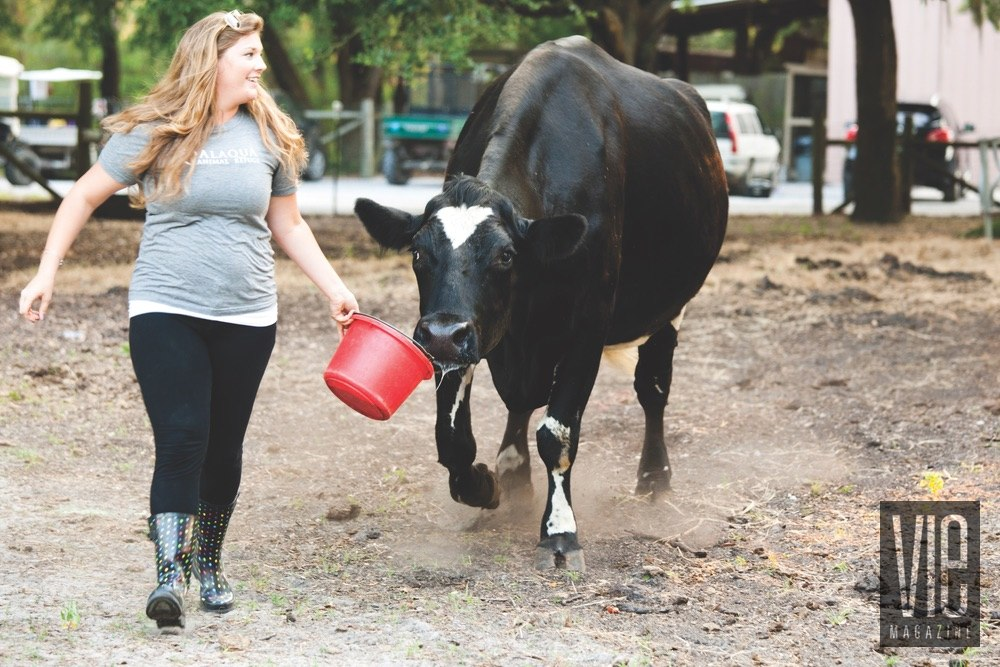 Vie Magazine Alaqua Animal Refuge girl feeding a cow