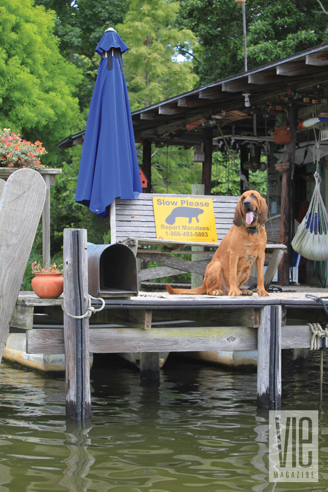 Dog sitting on a dock in Fairhope, Alabama