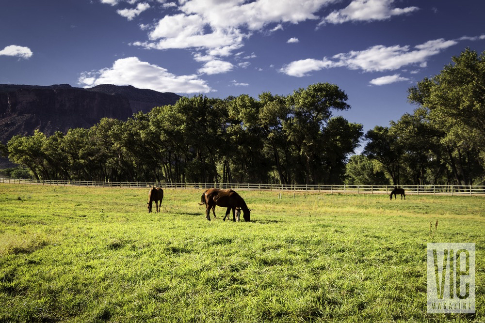 Horses Grazing With A Backdrop Of The Colorado Canyons At The Gateway Canyons Resort And Spa
