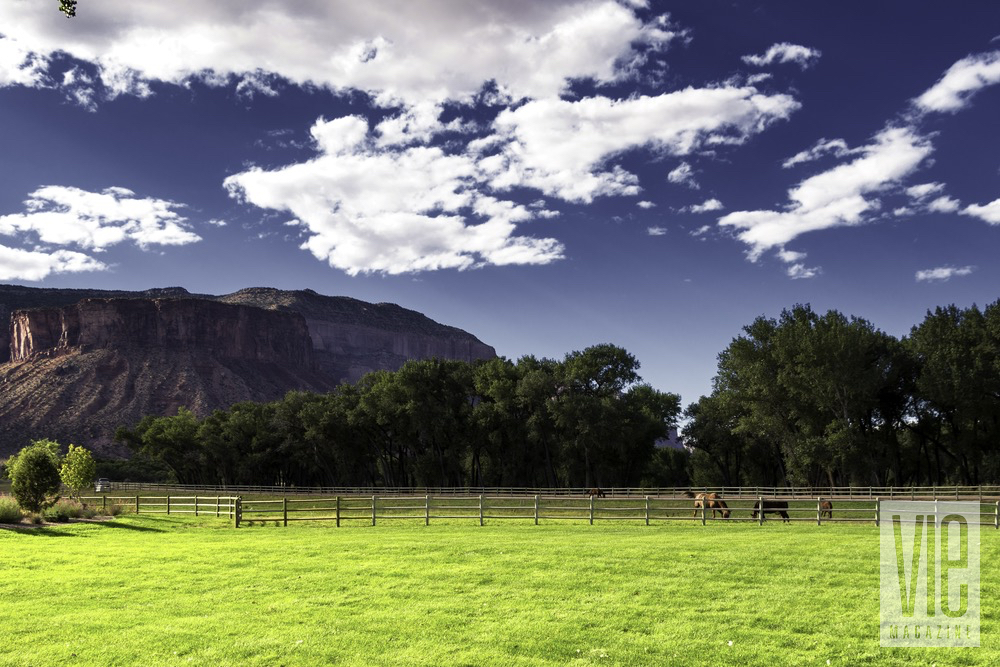 Horses Grazing The Grass With A Backdrop Of The Colorado Canyons At The Gateway Canyons Resort And Spa