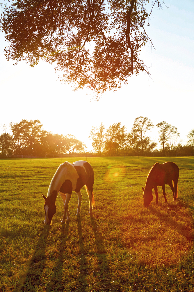 Horses at the farmhouse Susan Lovelace interior design Home and Decor Issue 2016