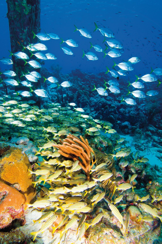 Bonaire ocean life
