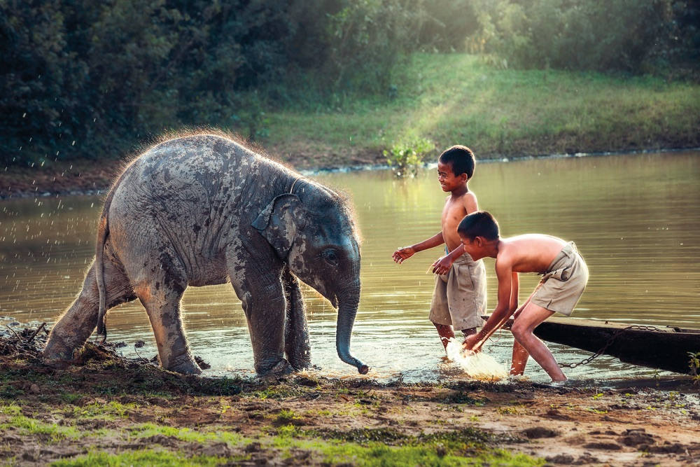 Vie Magazine, baby elephant plays with little boy