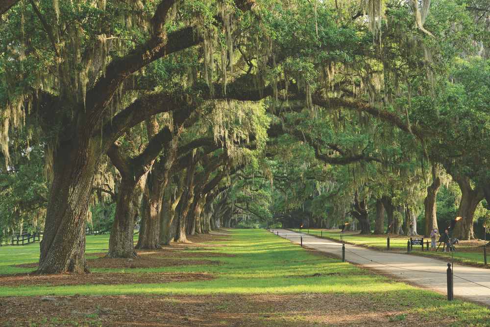 Charleston, South Carolina; Plantation