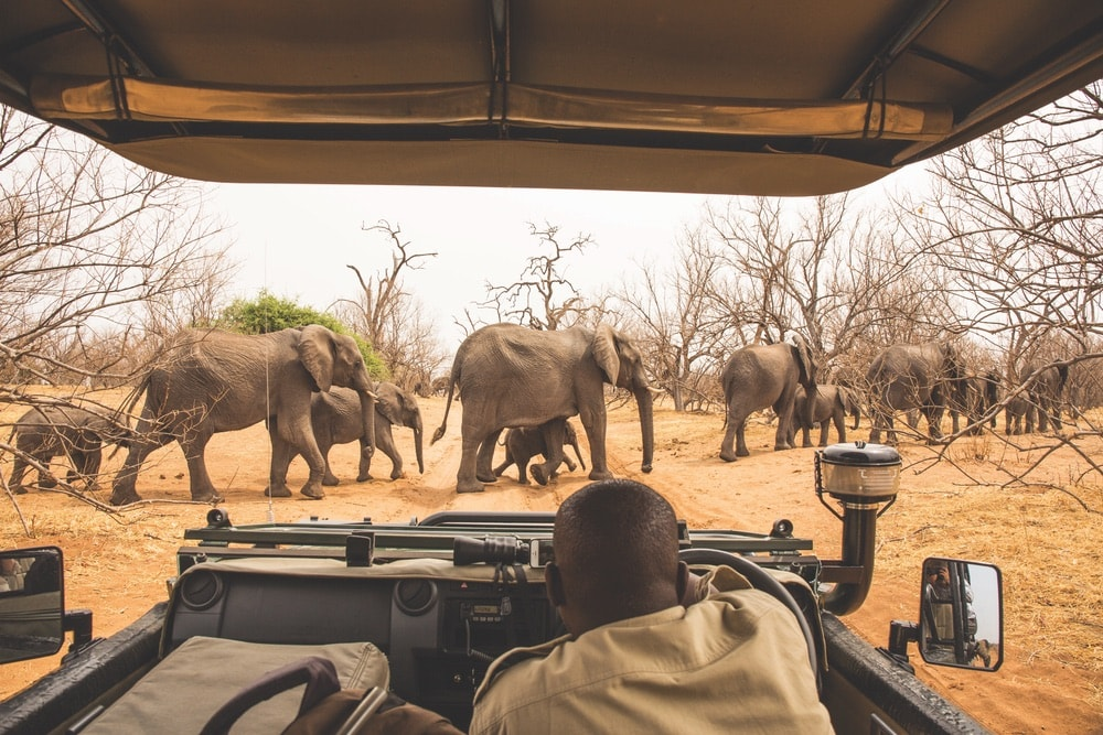 The Botswana and Zambia Safari is one of Acanela's most popular experiences. Here, elephants cross the road in Botswana's Chobe National Park.