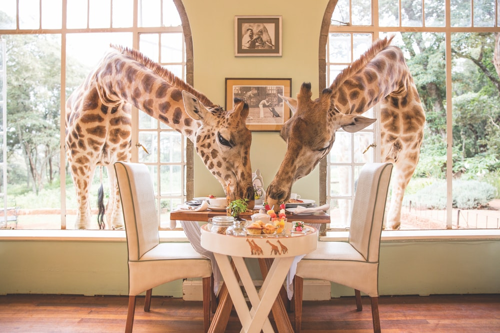 Giraffe Manor in Nairobi VIE Magazine Destination Travel 2018 Cest la VIE