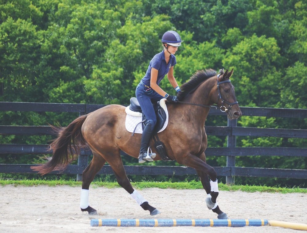 Off-the-track Thoroughbred (OTTB) That's Nothin' in training for a second career at the Maker's Mark Secretariat Center