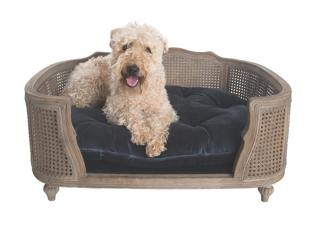 Arthur Pet Bed in Royal Blue Velvet